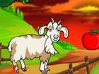 Eine Barbari-Ziege, die in einem Wald gefang...