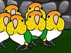 Wir wissen, dass Sie ein großer Fan von Caique Papageien entkommen sind,