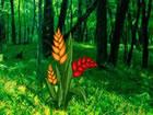 In diesem Fluchtspiel bist du zum Wald gekommen. Jemand hat die goldene Blume i