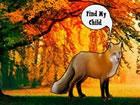 Der Fuchs hat in diesem Wald ein Kind verloren. Niemand ist da, um dem Fuchs zu