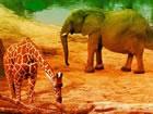 Escape From African Zoo ist ein spannendes Point and Click-Spiel für Tiere, da