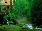 Ein Fluchtspiel, das Sie in einen Flusswald führt. Das Spiel ist voller R&