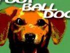 FootballDog - es war ein gewöhnlicher Fußballspiel, aber ein verrückter Hund