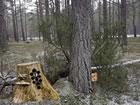 Gefrorene Waldabenteuer ist ein von Ainars und Zeb For Escape Fan erstelltes Po