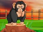 Gorilla ist sehr hungrig und in einer Einric...