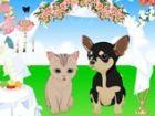 Wählen Sie Hochzeit Kleider für Katze und Hund