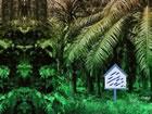 In diesem Fluchtspiel bist du gekommen, um die Schönheit des Palmenwaldes