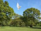 Ein Fluchtspiel, das Sie in einen Naturbaum ...