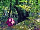 In diesemNatur Waldland Fluchtspiel haben Sie die Schönheit des Natu