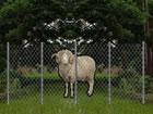 In diesemNaturdorf Schafe Rettung Fluc...