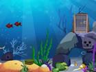 In diesem Spiel sind Fische in 5 Stufen gesperrt. Sie müssen den Schlü