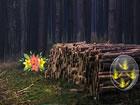 In diesem Fluchtspiel flucht ein Glorreiche Mädchen in diesem Wald. Sie m&