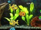 Versuchen Sie, die Fische kleiner als Sie essen...