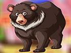 Ein ziemlich gut aussehender Schwarzbär lebte in einer wunderschönen