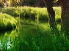 In diesem Fluchtspiel bist du im Smaragdgrün Wald gefangen. Niemand ist da