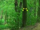 In diesem Wachstum Baum Wald Flucht spiel bist du in diesem Wachstums baum wald