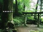 Ein Fluchtspiel, das Sie in ein Forest Shrin...