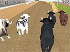 Sie können Angry Bull Racing kostenlos in Ihrem Browser spielen. Wüte