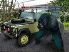 Fahren Sie um eine luxuriöse Zoo mit exotische...